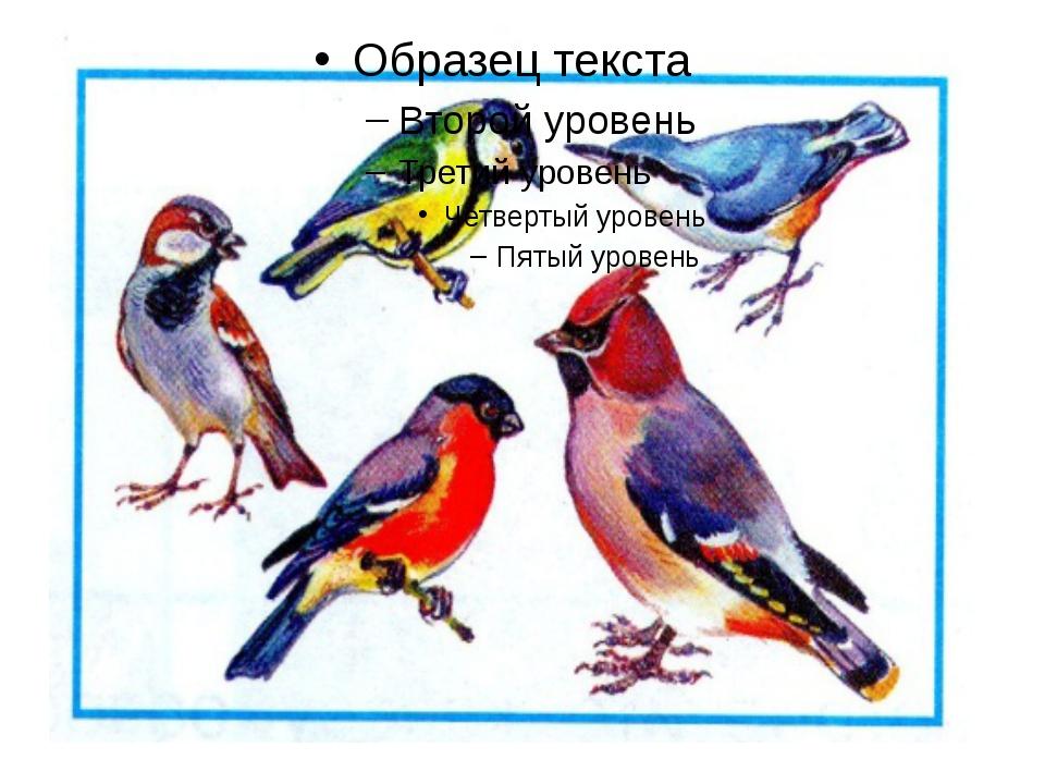 Слушаем загадку, узнаём птицу.