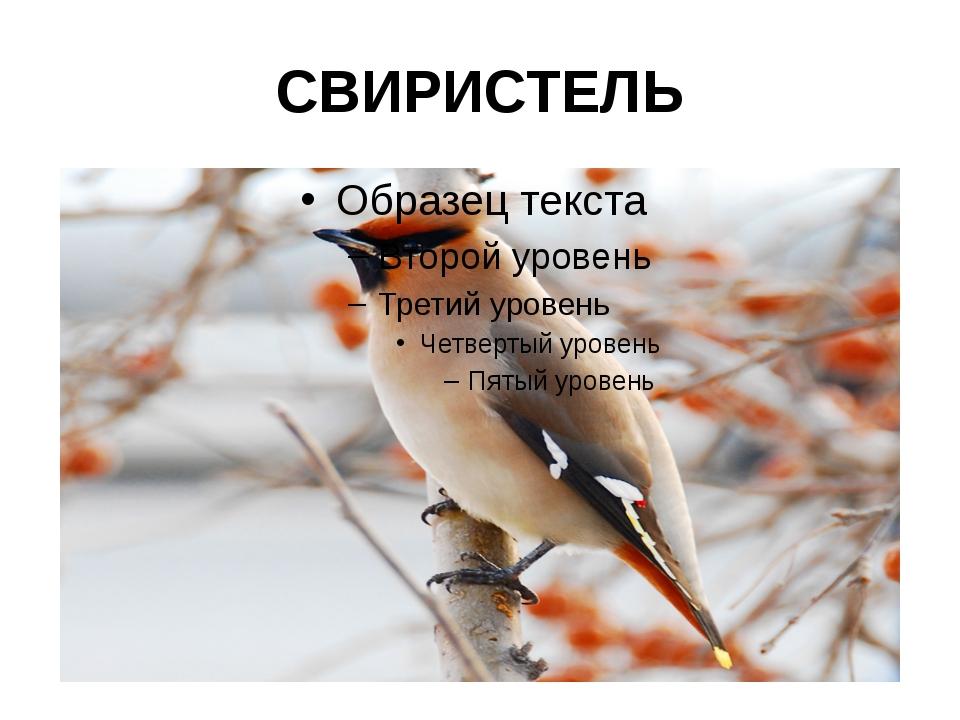СВИРИСТЕЛЬ