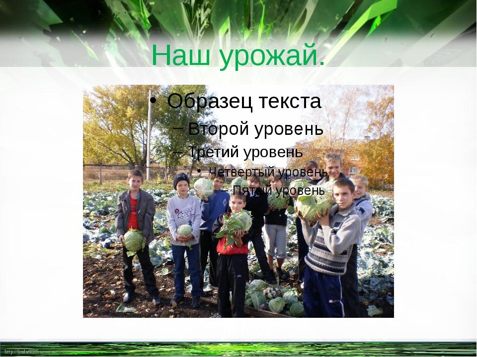 Наш урожай. http://linda6035.ucoz.ru/