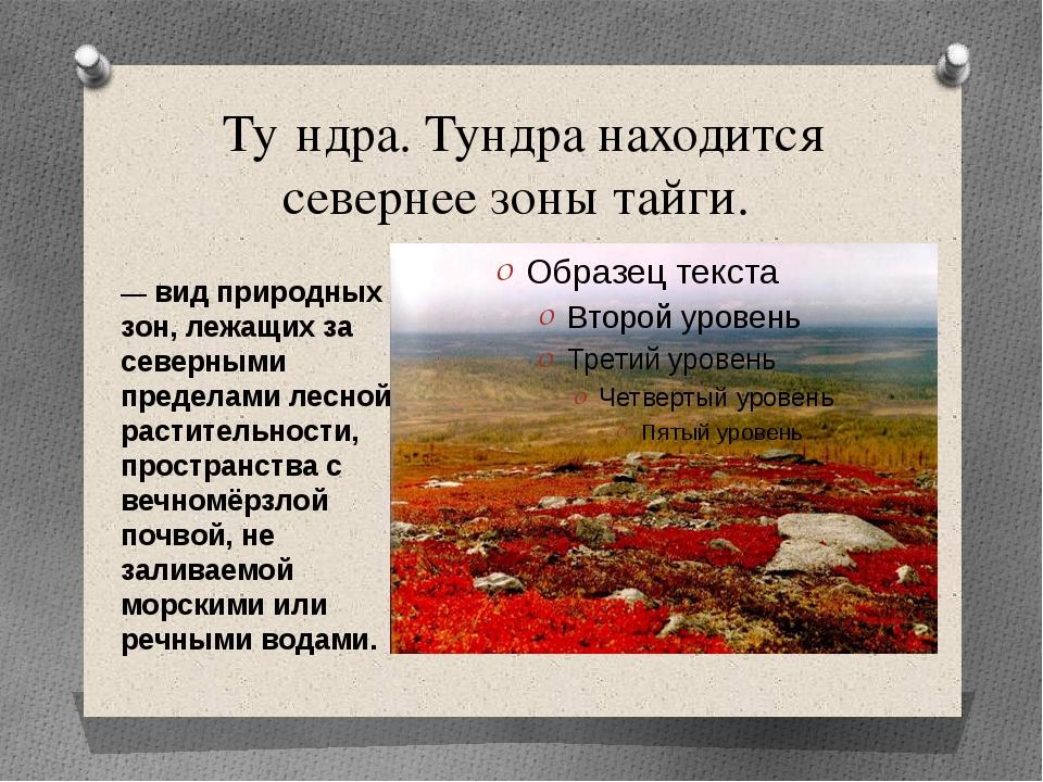 Ту́ндра. Тундра находится севернее зоны тайги. — вид природных зон, лежащих з...
