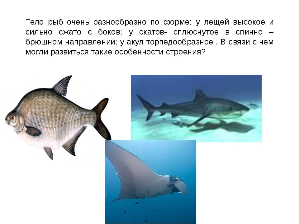 Тело рыб очень разнообразно по форме: у лещей высокое и сильно сжато с боков;...