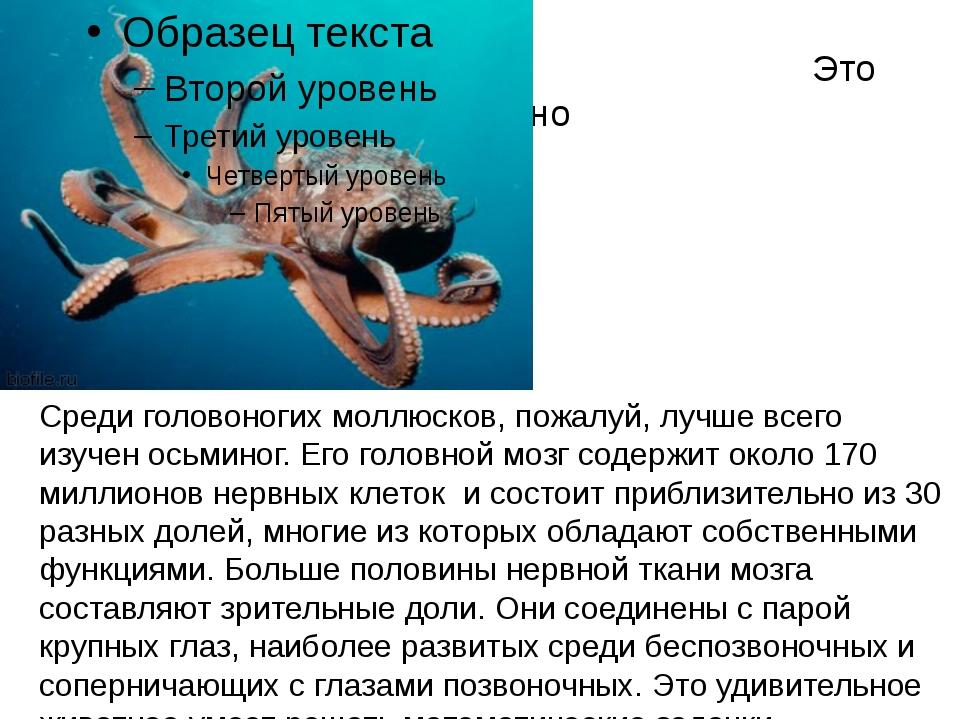Это интересно Среди головоногих моллюсков, пожалуй, лучше всего изучен осьми...
