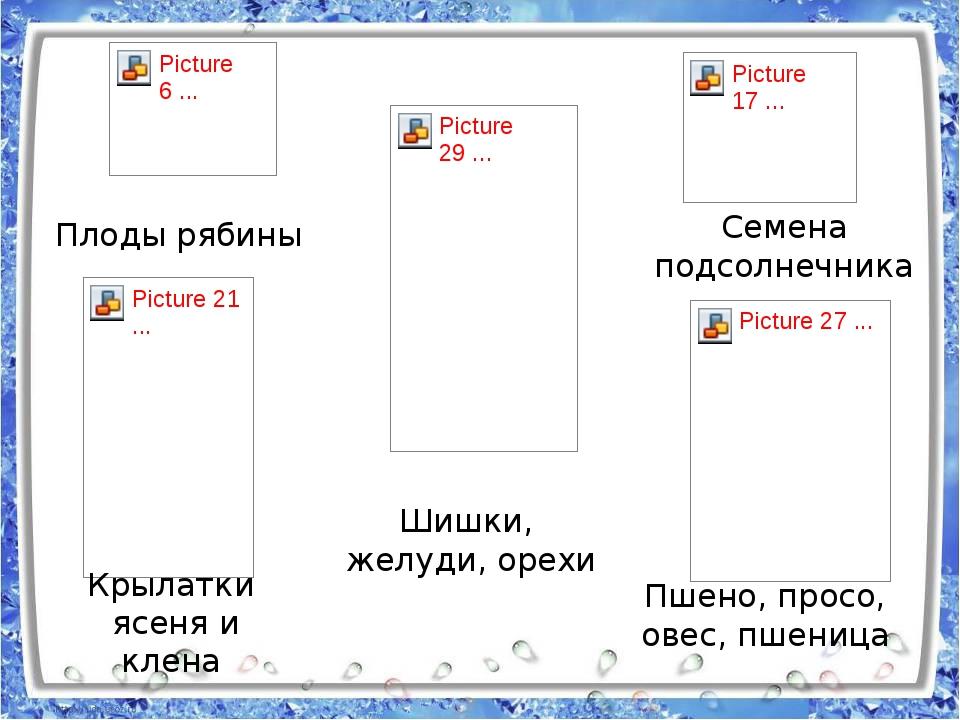 Информационные ресурсы: Сойка http://rbcu.ru/upload/medialibrary/005/jay__.jp...
