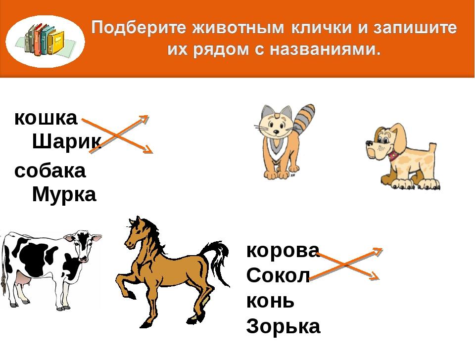 кошка Шарик собака Мурка корова Сокол конь Зорька