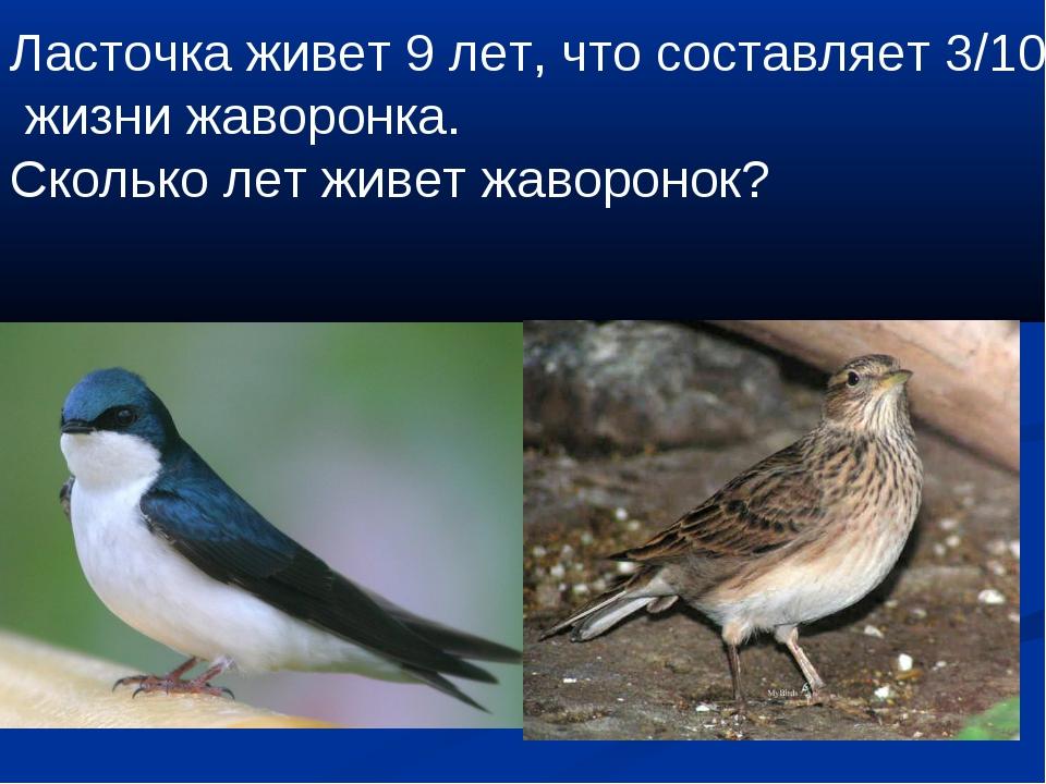 Ласточка живет 9 лет, что составляет 3/10 жизни жаворонка. Сколько лет живет...