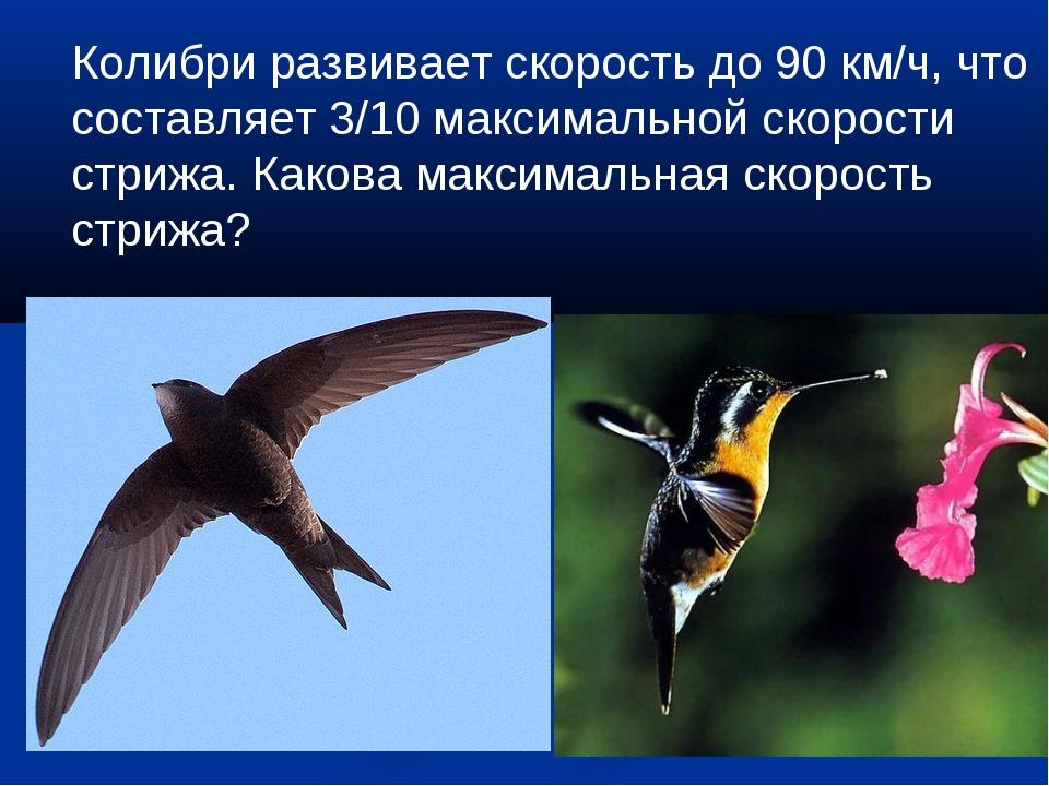 Колибри развивает скорость до 90 км/ч, что составляет 3/10 максимальной скоро...
