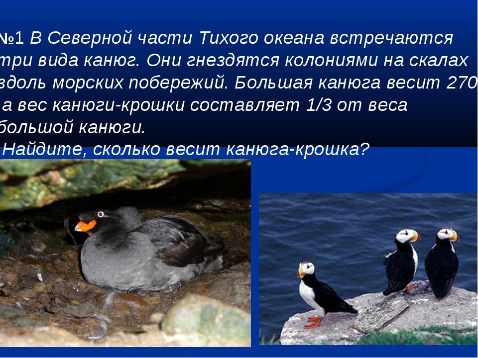 №1 В Северной части Тихого океана встречаются три вида канюг. Они гнездятся...