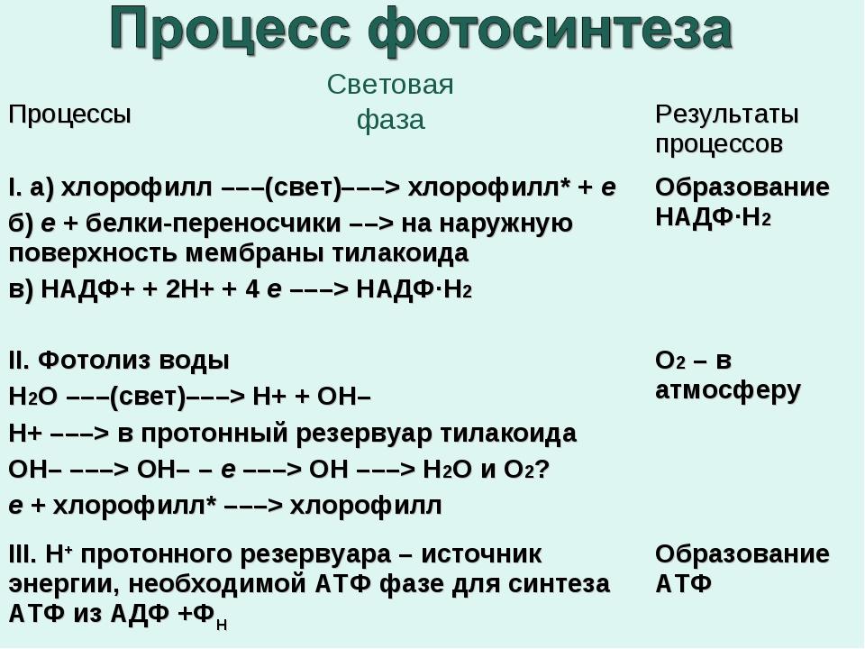 Какие стадии фотосинтеза существует