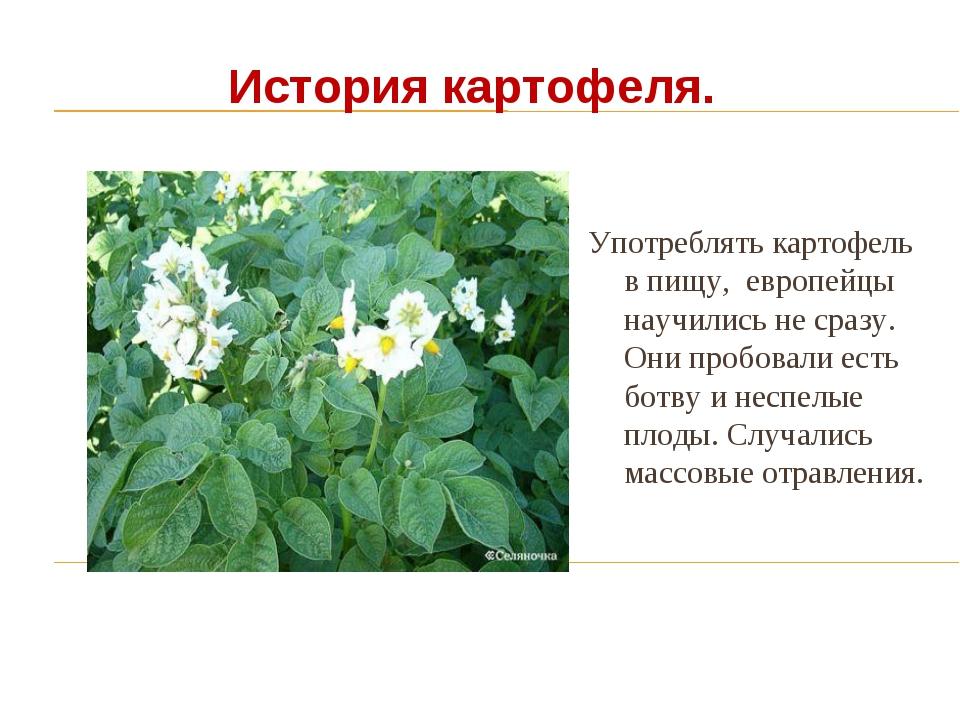 История о картофеле картинки
