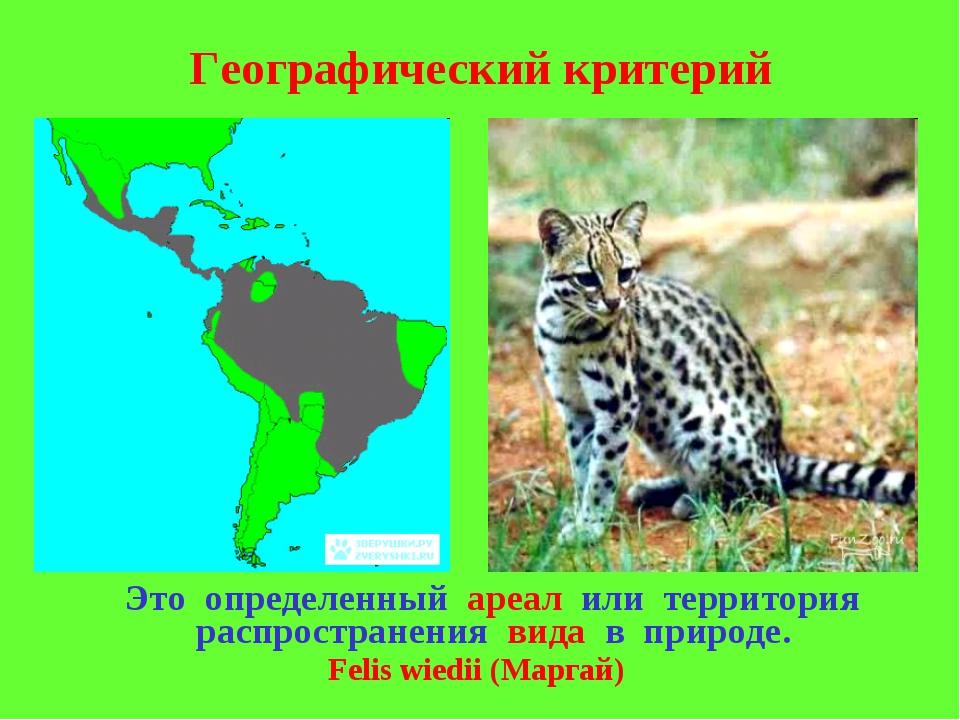 Географический критерий Это определенный ареал или территория распространения...