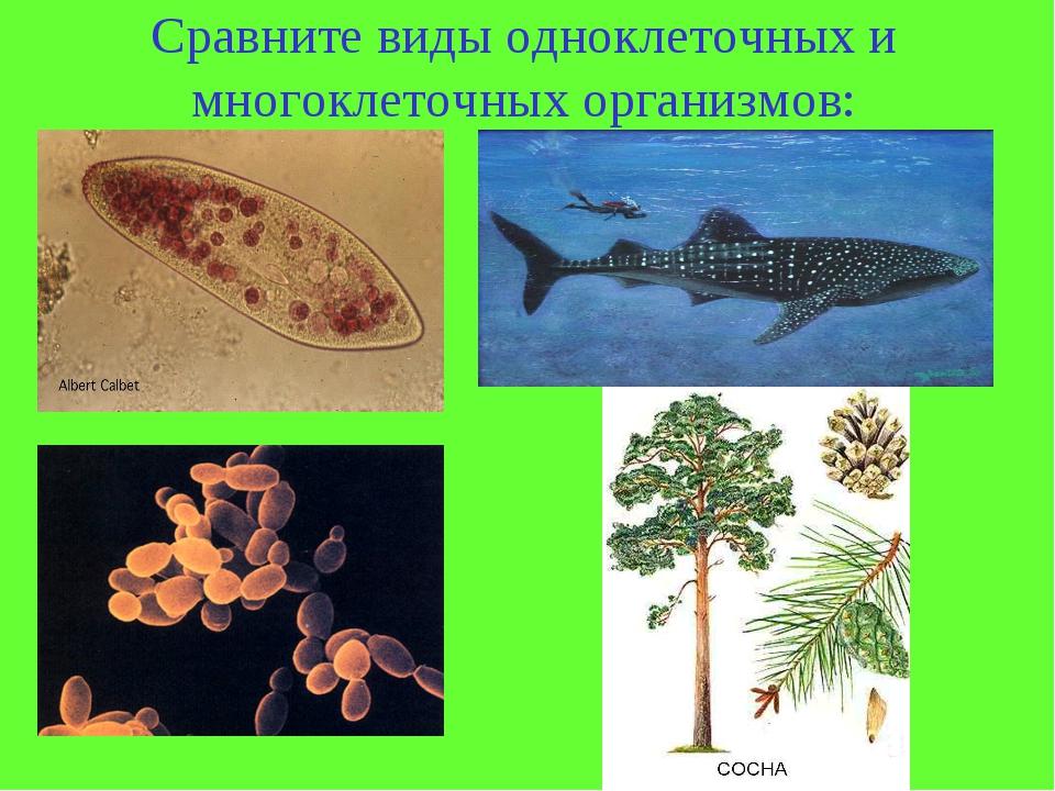 Сравните виды одноклеточных и многоклеточных организмов: