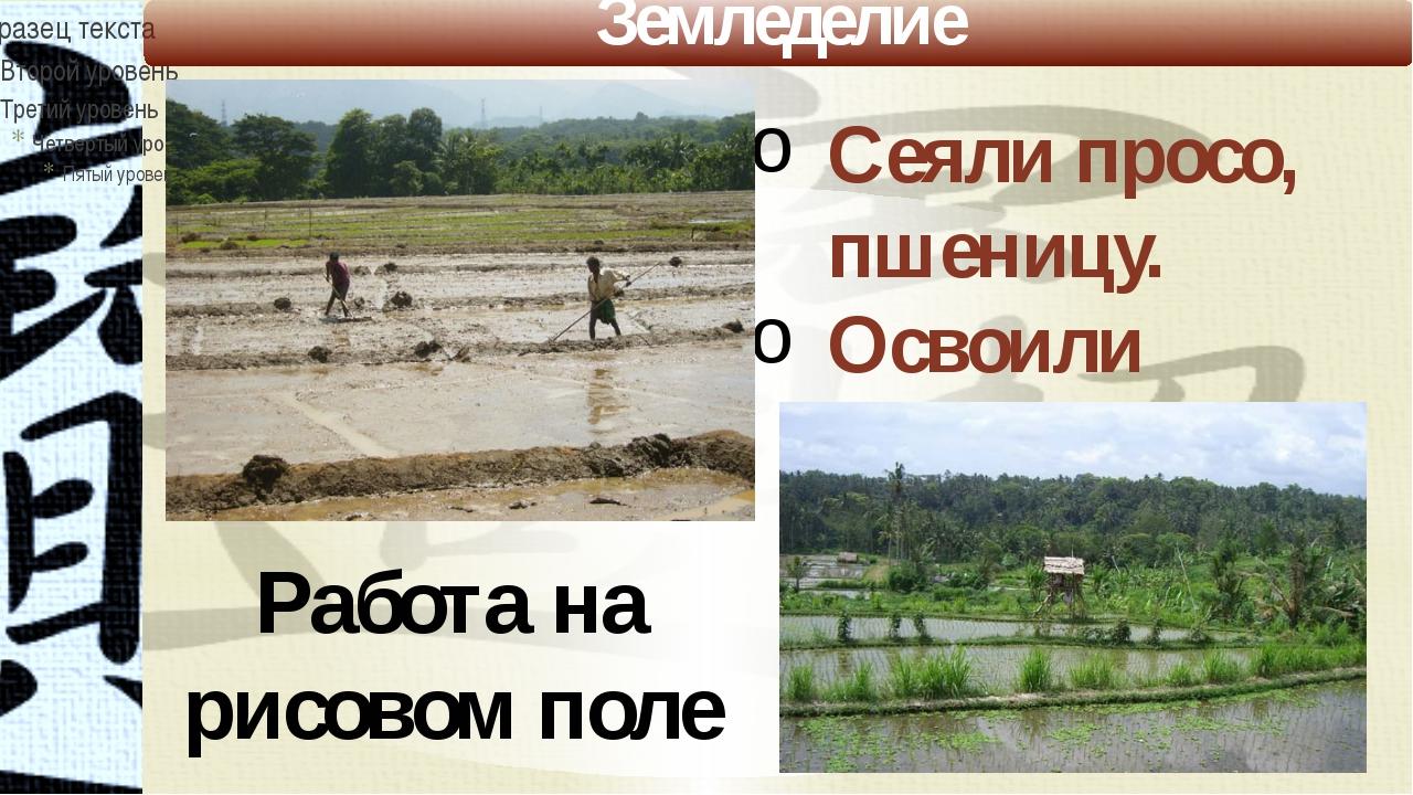 Земледелие Работа на рисовом поле Сеяли просо, пшеницу. Освоили выращивание р...