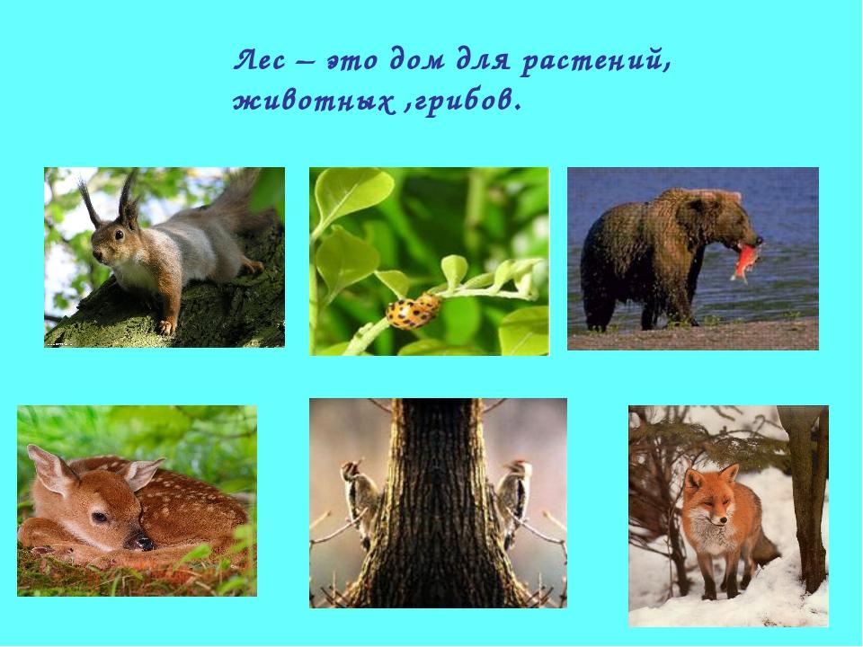 Лес – это дом для растений, животных ,грибов.