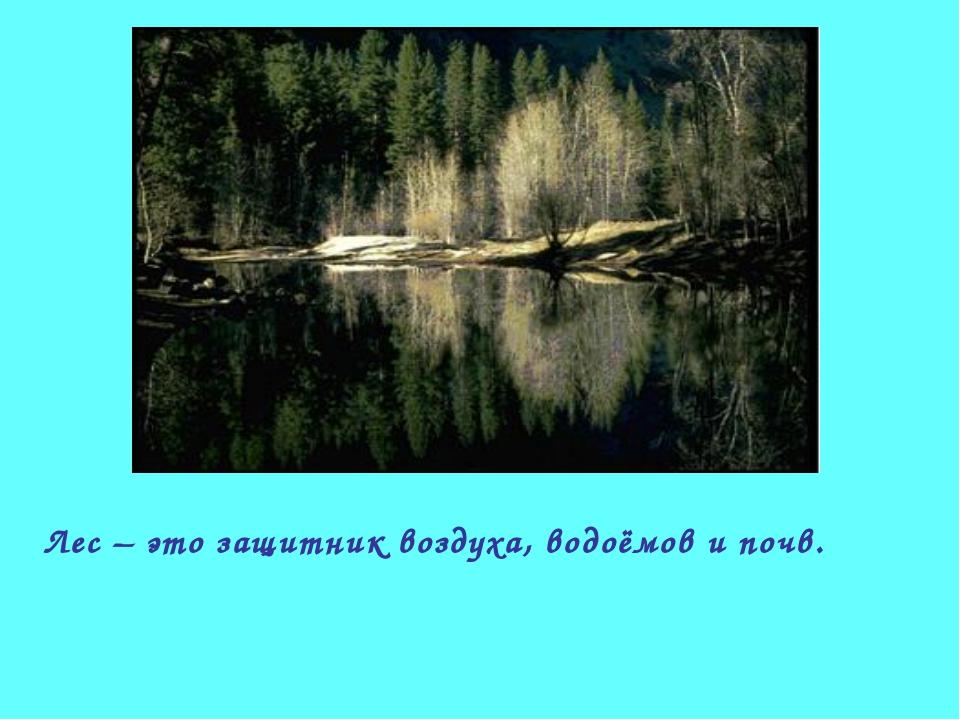 Лес – это защитник воздуха, водоёмов и почв.