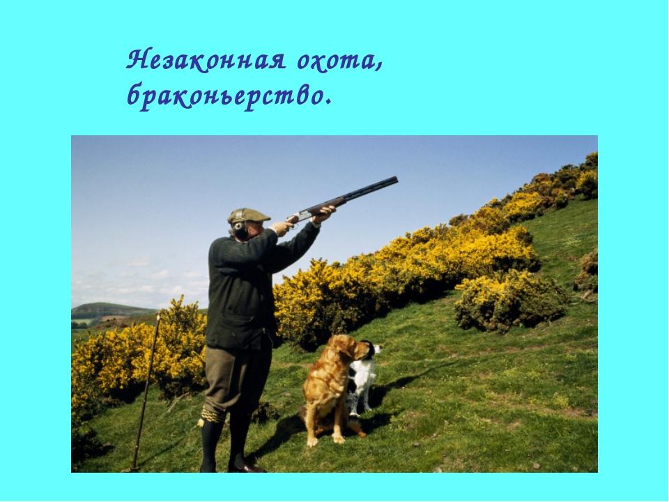 Незаконная охота, браконьерство.