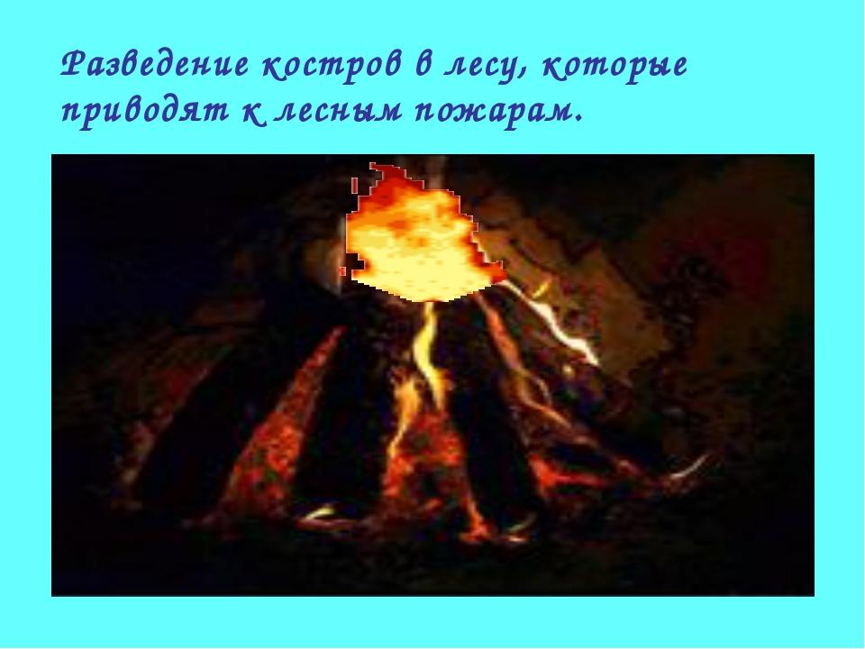 Разведение костров в лесу, которые приводят к лесным пожарам.