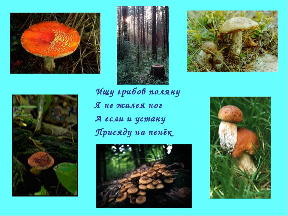 Ищу грибов поляну Я не жалея ног А если и устану Присяду на пенёк