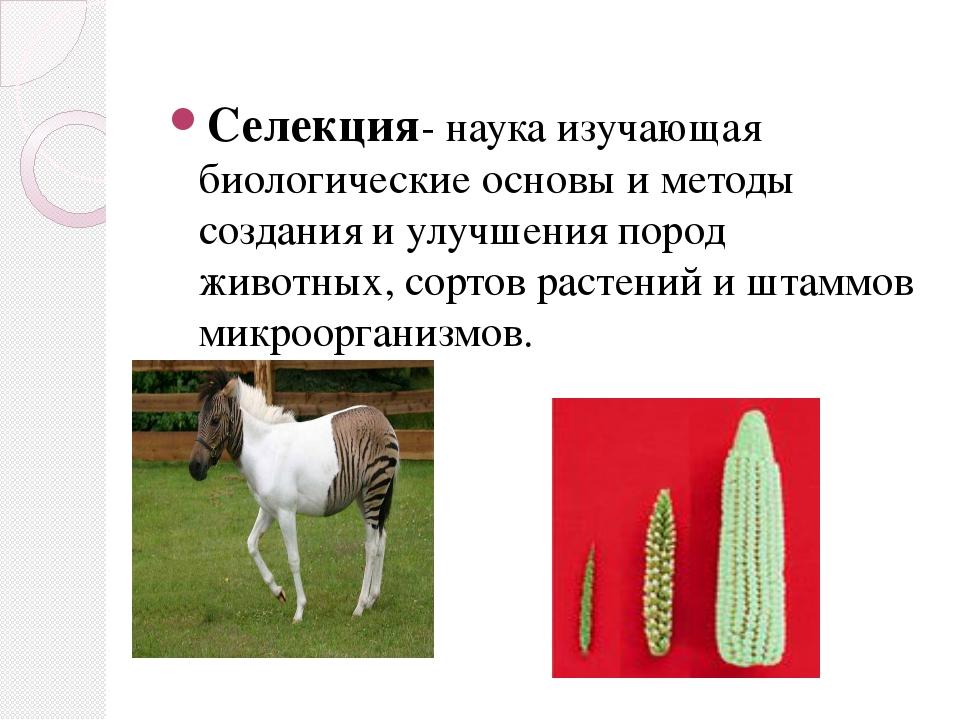 Селекция- наука изучающая биологические основы и методы создания и улучшения...