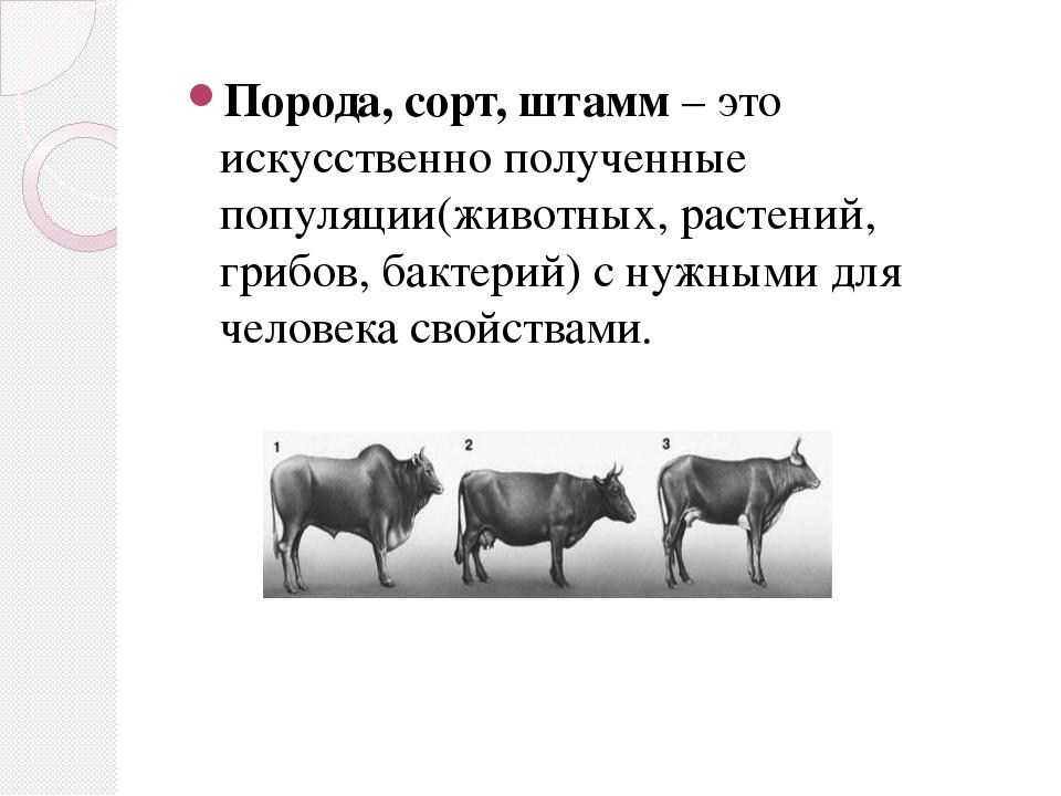 Порода, сорт, штамм – это искусственно полученные популяции(животных, растени...