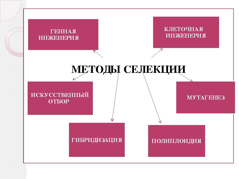 МЕТОДЫ СЕЛЕКЦИИ ИСКУССТВЕННЫЙ ОТБОР ГИБРИДИЗАЦИЯ ПОЛИПЛОИДИЯ МУТАГЕНЕЗ КЛЕТО...