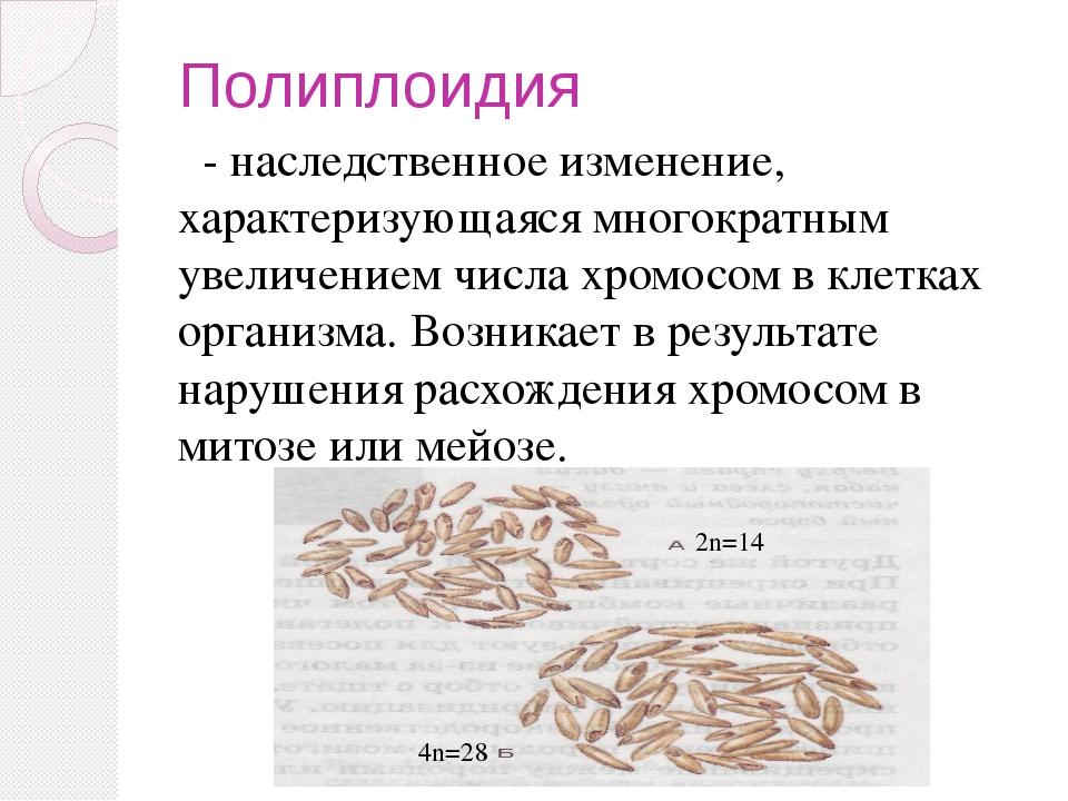 Полиплоидия - наследственное изменение, характеризующаяся многократным увелич...