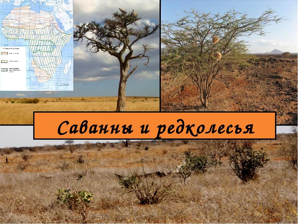 Саванны и редколесья