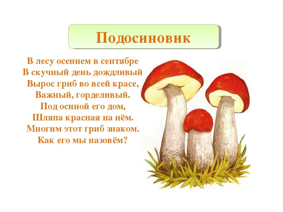 В лесу осеннем в сентябре В скучный день дождливый Вырос гриб во всей красе,...