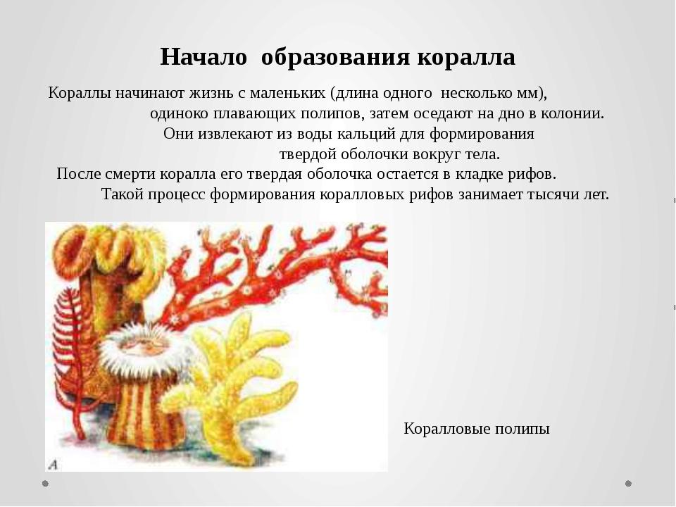 Кораллы начинают жизнь с маленьких (длина одного несколько мм), одиноко плава...