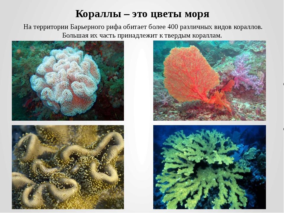 Кораллы – это цветы моря На территории Барьерного рифа обитает более 400 разл...