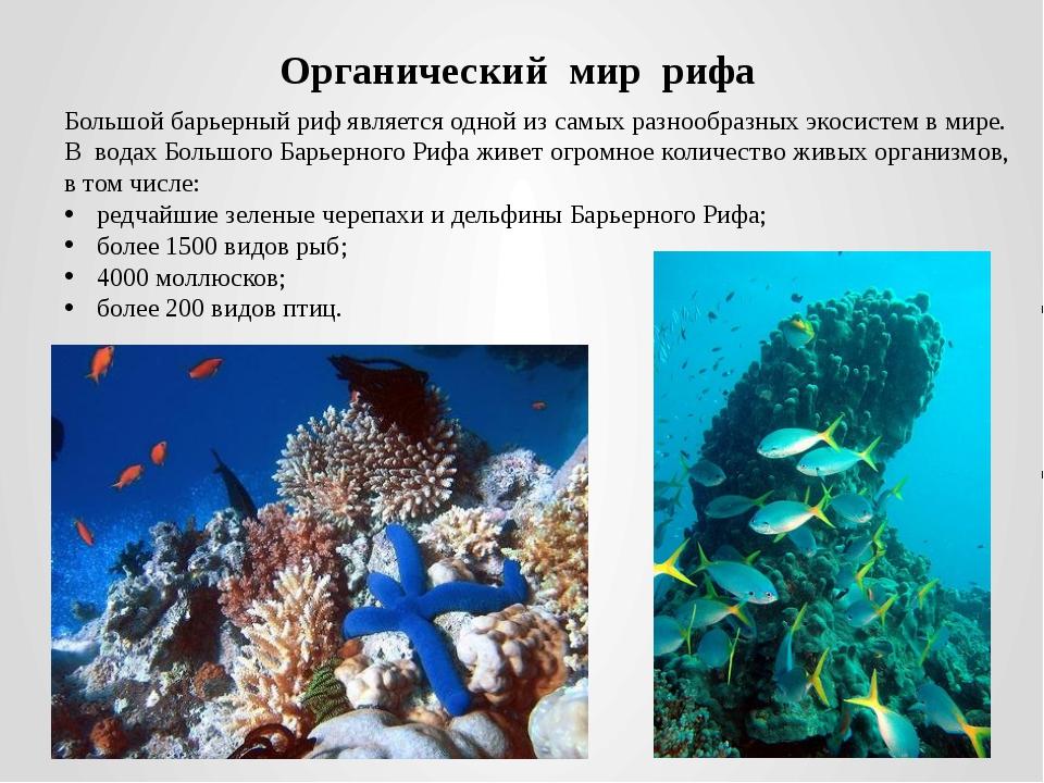 Органический мир рифа Большой барьерный риф является одной из самых разнообра...