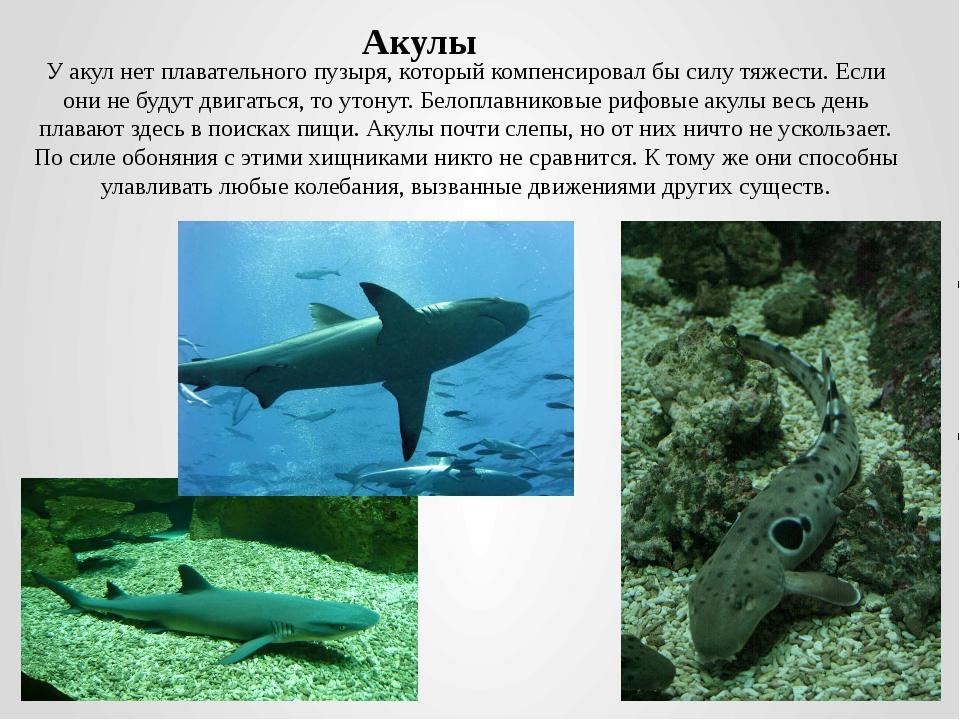 У акул нет плавательного пузыря, который компенсировал бы силу тяжести. Если...