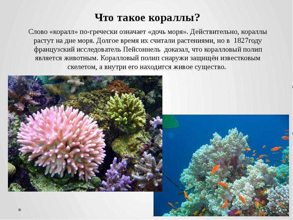 Слово «коралл» по-гречески означает «дочь моря». Действительно, кораллы расту...