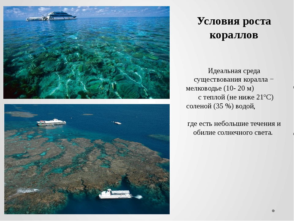 Идеальная среда существования коралла − мелководье (10- 20 м) с теплой (не ни...
