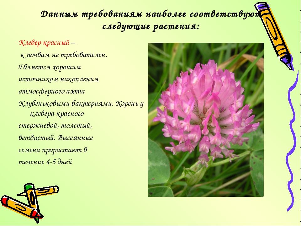 Данным требованиям наиболее соответствуют следующие растения: Клевер красный...