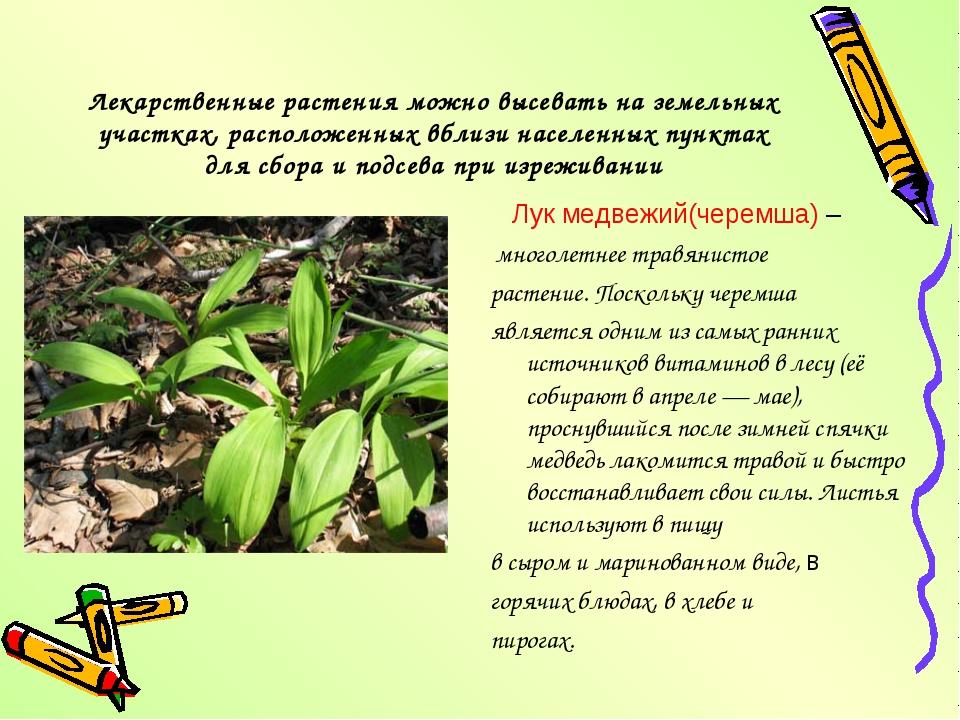 Лекарственные растения можно высевать на земельных участках, расположенных вб...