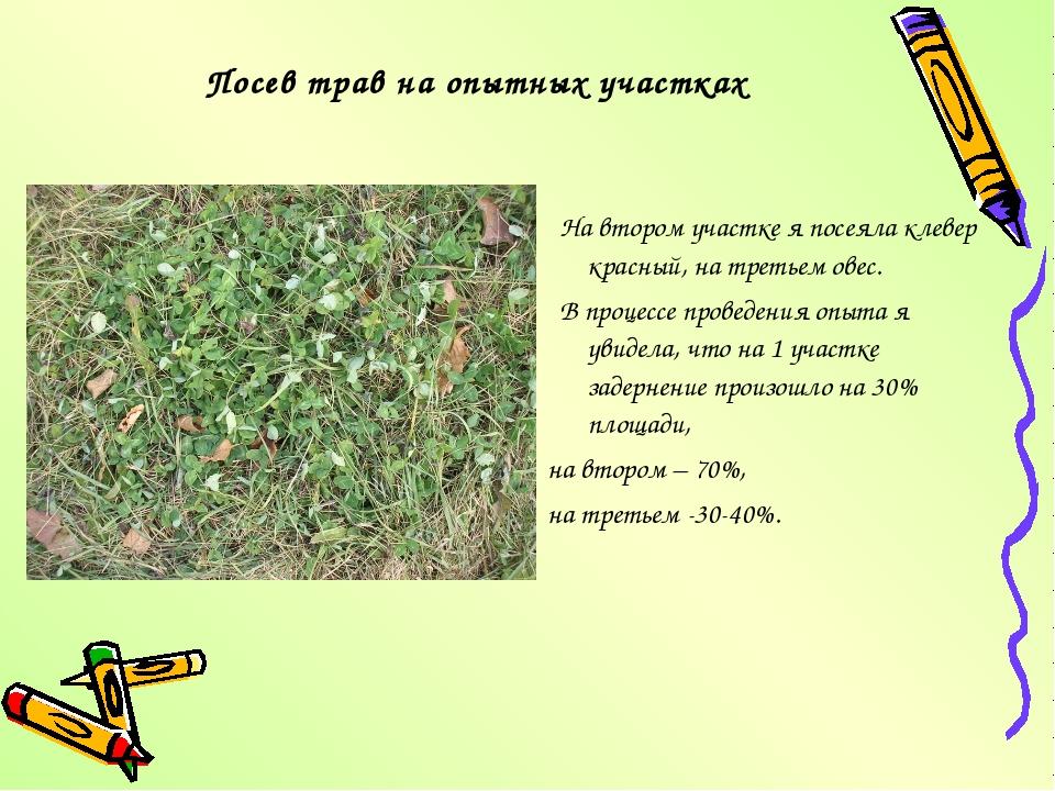 Посев трав на опытных участках На втором участке я посеяла клевер красный, на...