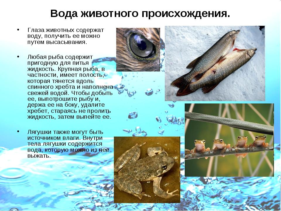 Вода животного происхождения. Глаза животных содержат воду, получить ее можно...