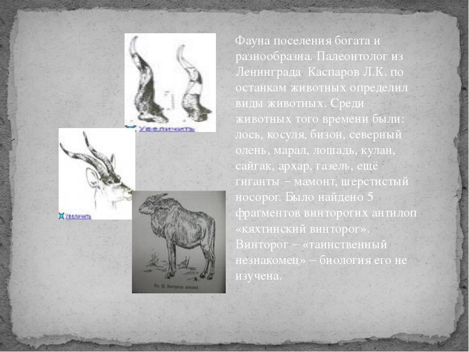 Фауна поселения богата и разнообразна. Палеонтолог из Ленинграда Каспаров Л.К...