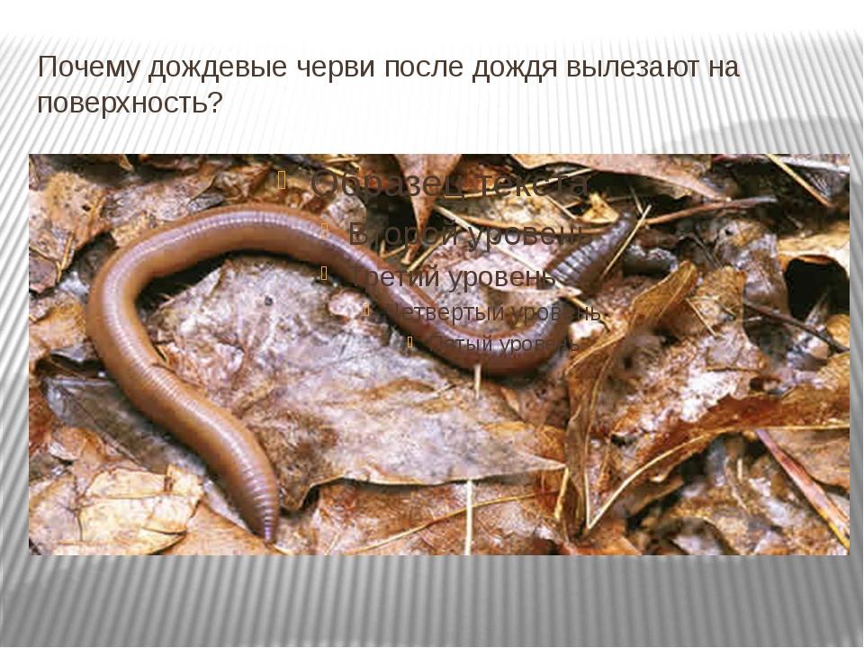Почему дождевые черви после дождя вылезают на поверхность?