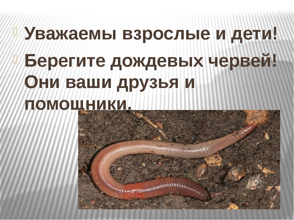 Уважаемы взрослые и дети! Берегите дождевых червей! Они ваши друзья и помощн...