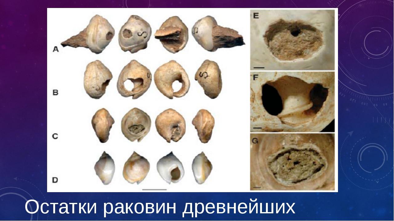 Остатки раковин древнейших моллюсков