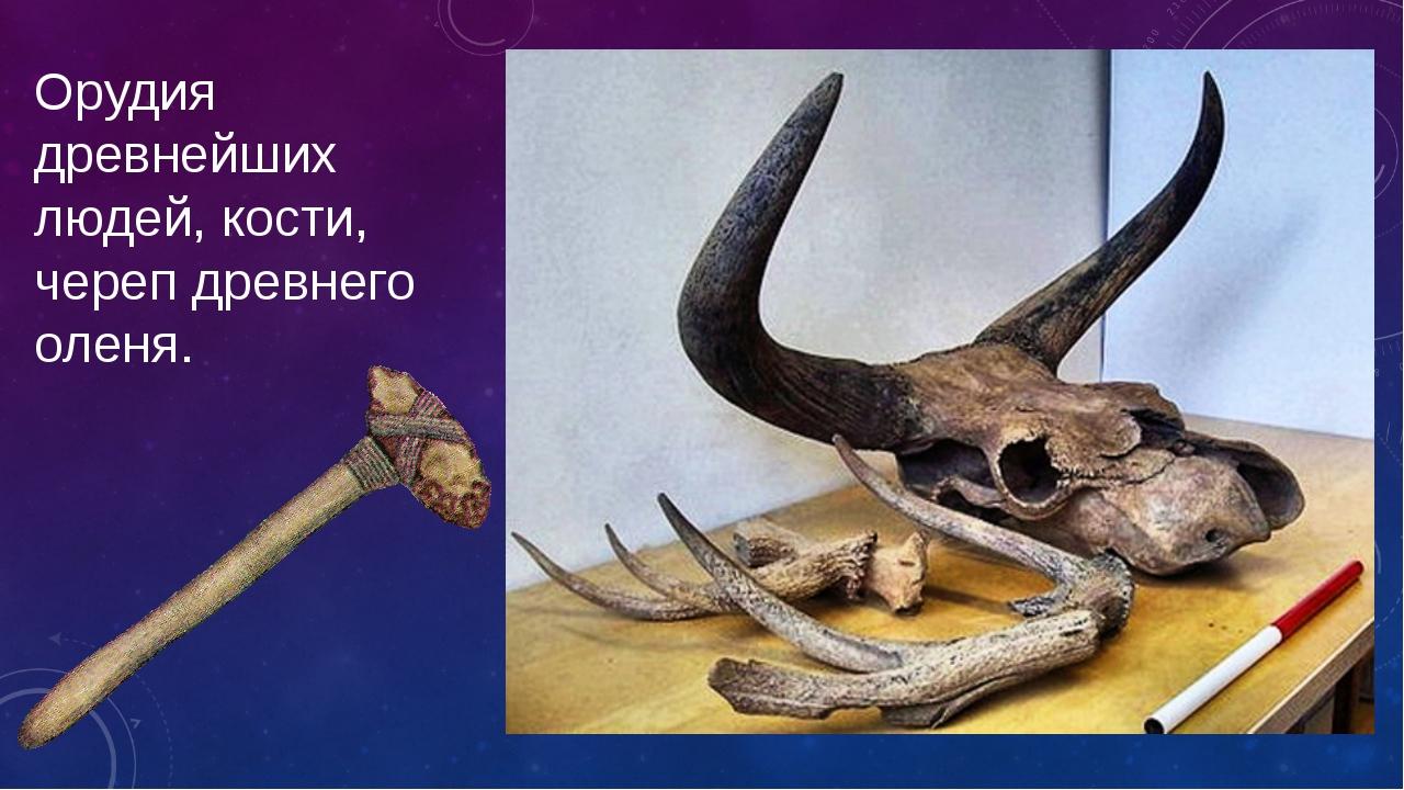 Орудия древнейших людей,кости, черепдревнего оленя.