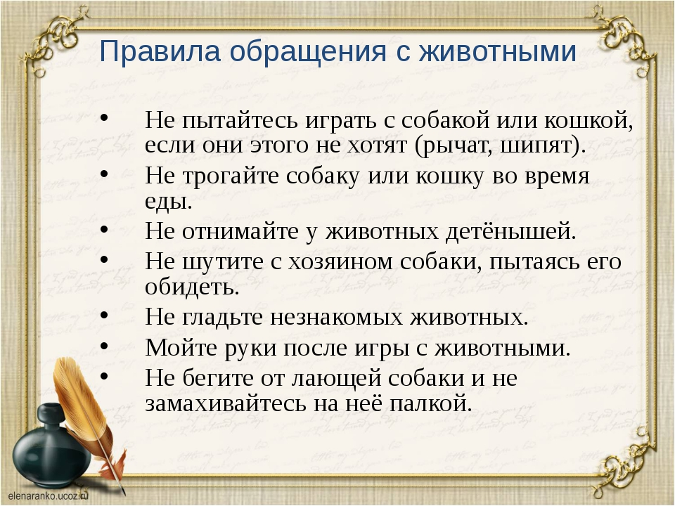 Правила обращения с животными Не пытайтесь играть с собакой или кошкой, если...