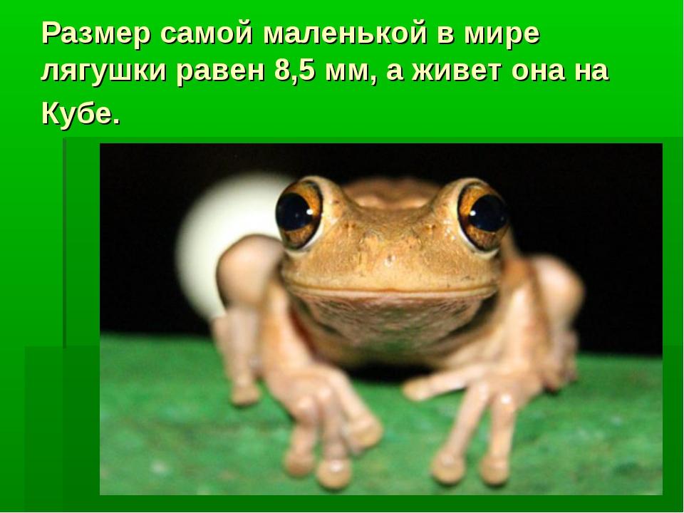 Размер самой маленькой в мире лягушки равен 8,5 мм, а живет она на Кубе.