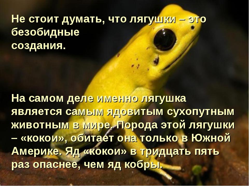 Не стоит думать, что лягушки – это безобидные создания. На самом деле именно...