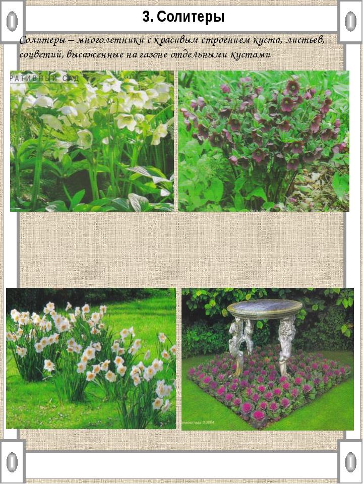 3. Солитеры Солитеры – многолетники с красивым строением куста, листьев, соцв...