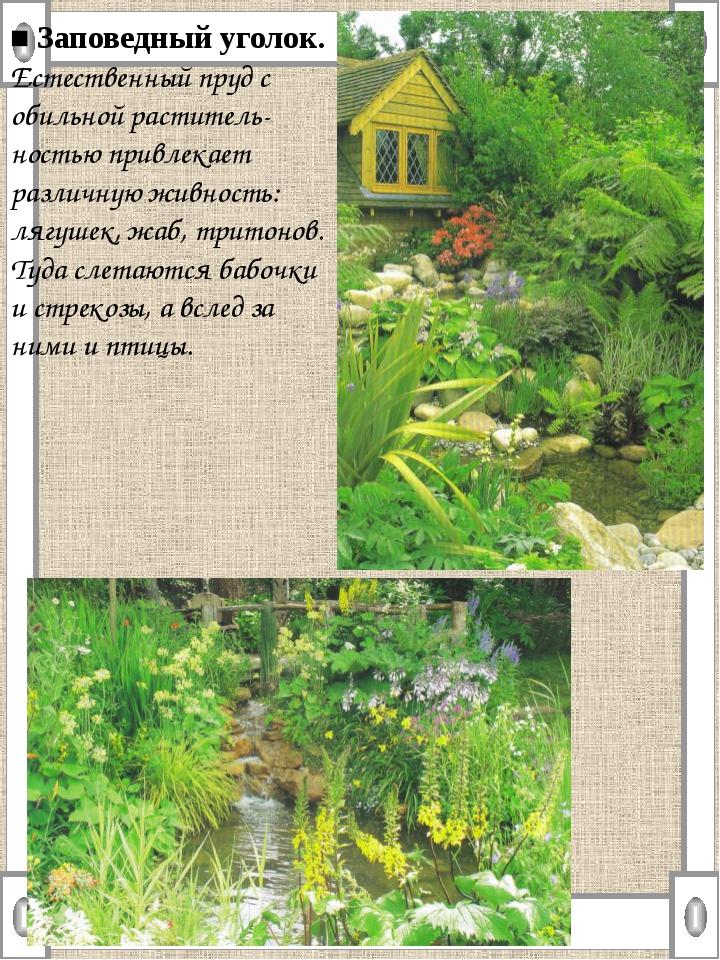 ■ Заповедный уголок. Естественный пруд с обильной раститель-ностью привлекает...