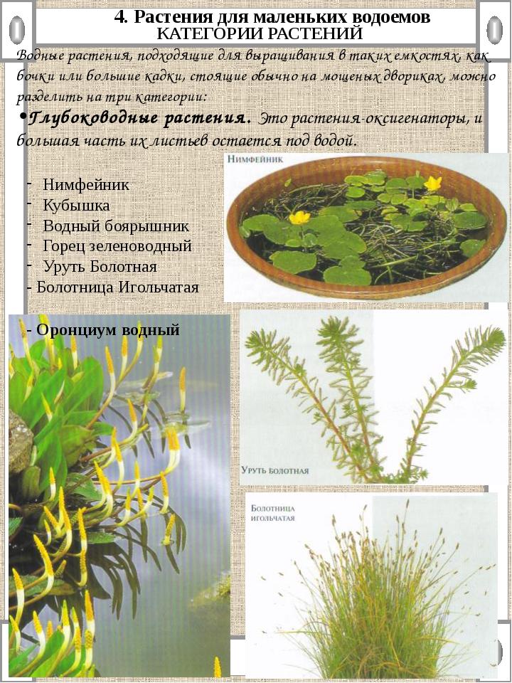 4. Растения для маленьких водоемов КАТЕГОРИИ РАСТЕНИЙ Водные растения, подход...