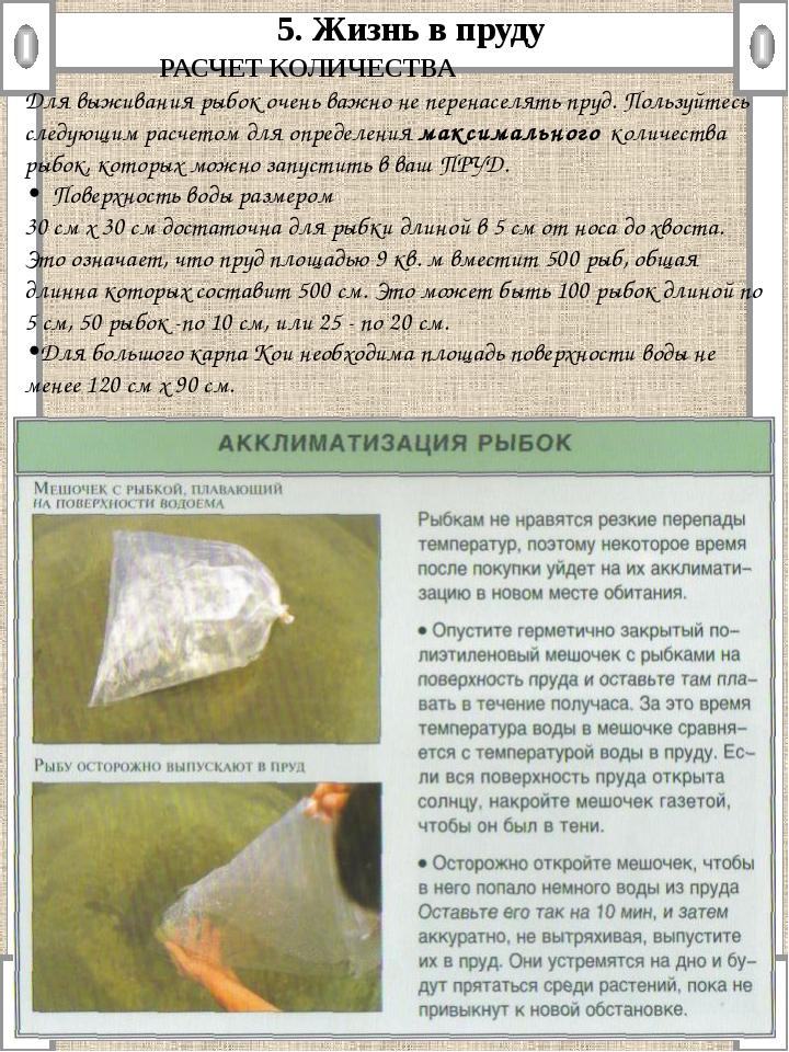 5. Жизнь в пруду  РАСЧЕТ КОЛИЧЕСТВА Для выживания рыбок очень важно не пере...