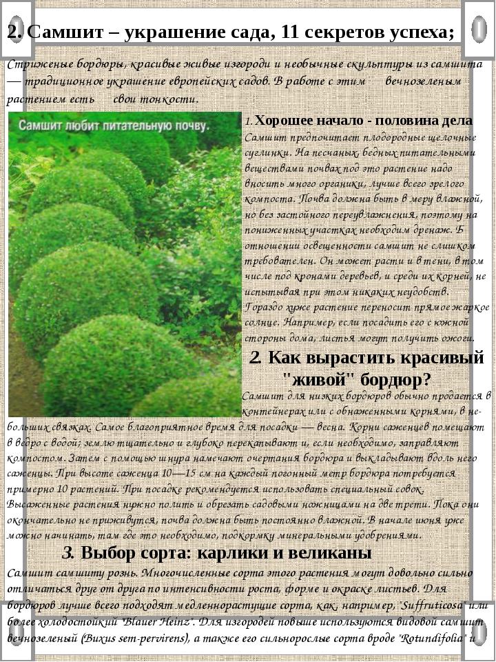 2. Самшит – украшение сада, 11 секретов успеха; Стриженые бордюры, красивые ж...